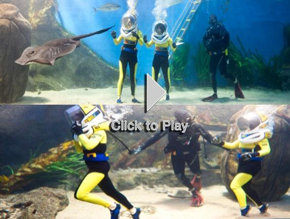 Shark Walker, haciendo buceo en el interior de un acuario