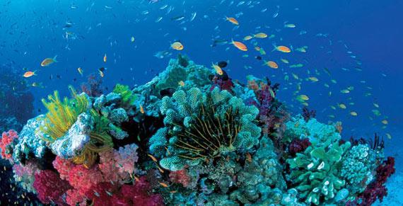 Great Barrier Reef, La Gran Barrera de Coral