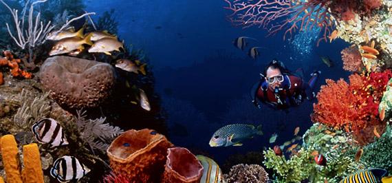 Escuelas de buceo, Viviendo bajo el agua